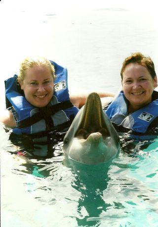 PP Dolphin hello